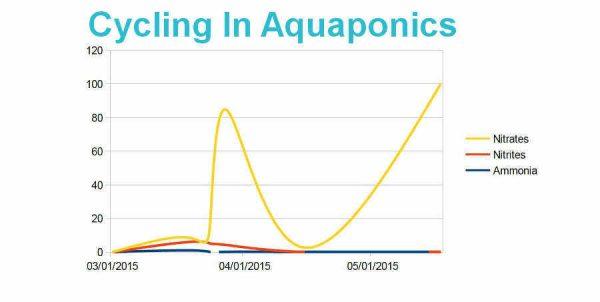 Cycling In Aquaponics