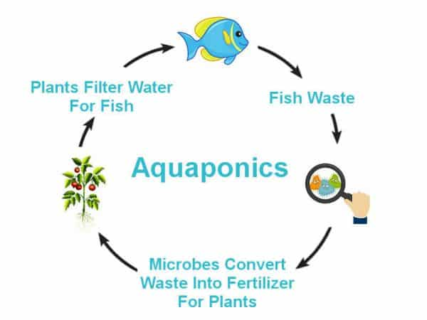 The Nitrogen Cycle Aquaponics Exposed