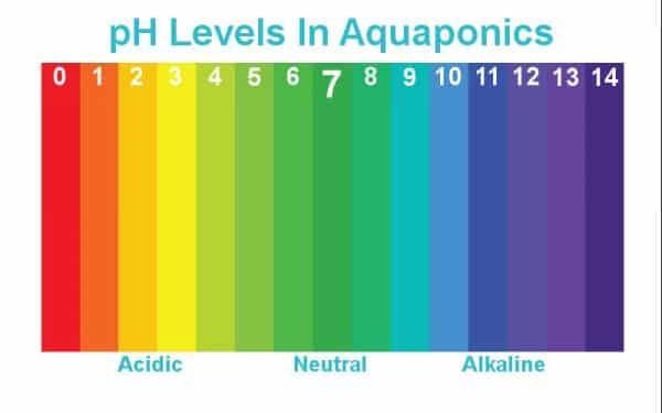 pH Levels In Aquaponics