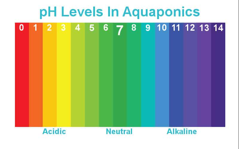 Iron deficiency in aquaponics aquaponics exposed for How to raise ph in fish tank